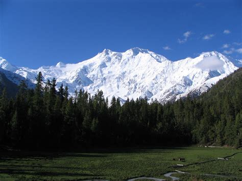 Things to See and Do in Srinagar - The Many Splendors of
