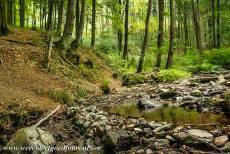 World Heritage Photos - Primeval Beech Forests of the